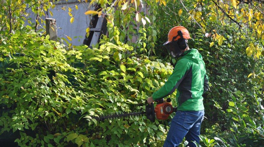 Gyermelyikert kertfenntartás